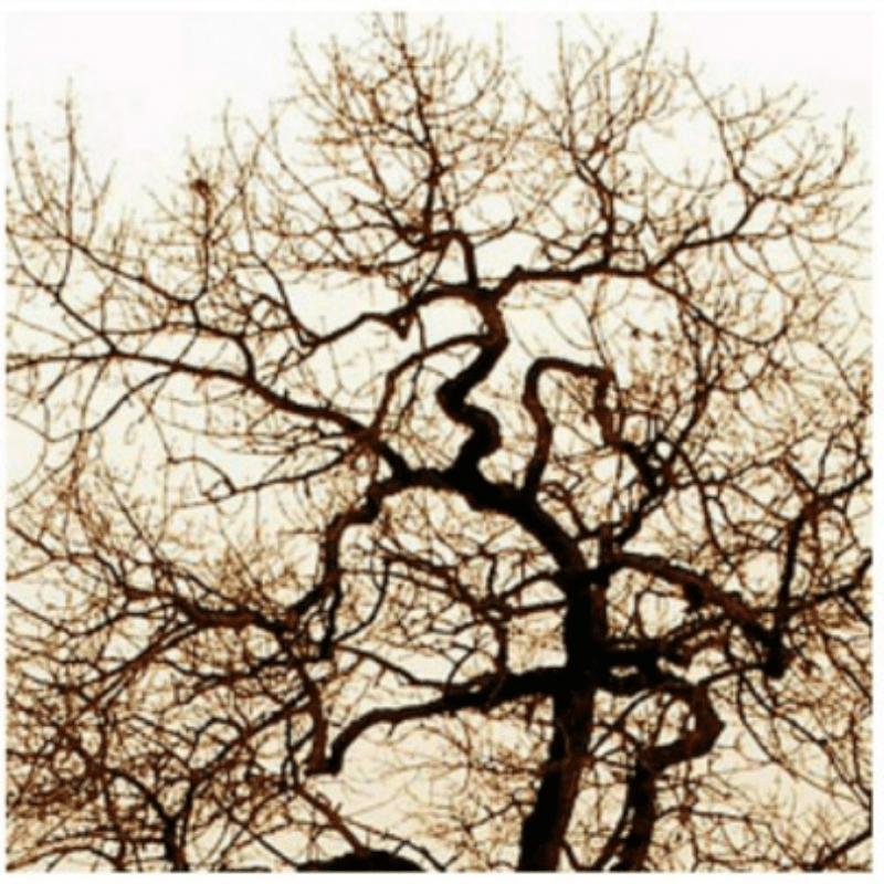 oak tree branch close up: fractal patterns in nature